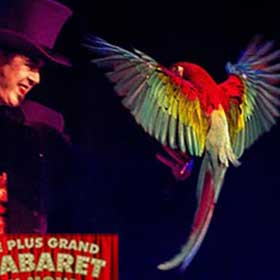 show magician with parrot
